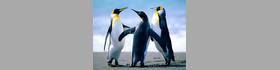 舞ワイフ CELEB CLUB